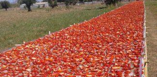 Επένδυση στην παραγωγή, αποξήρανση και τυποποίηση λιαστής ντομάτας
