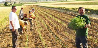 Έξτρα εισφορές για το αγροτικό εισόδημα χιλιάδων ετεροεπαγγελματιών