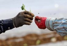 Η συνεταιριστική παρέμβαση στις αγροτικές εισροές