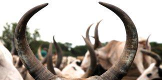 Οι 202 από τις 203 αιτήσεις των παραγωγών με τα νόθα στοιχεία στο ζωικό κεφάλαιο, υποβλήθηκαν από την ΕΑΣ Αγρινίου, λέτε να είναι τυχαίο;