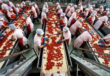 Η ζήτηση για πελτέ προσελκύει κεφάλαια στη βιομηχανική ντοματα