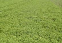 Στ. Αραχωβίτης: Tο 95% των τροφίμων παράγονται άμεσα ή έμμεσα από το έδαφος