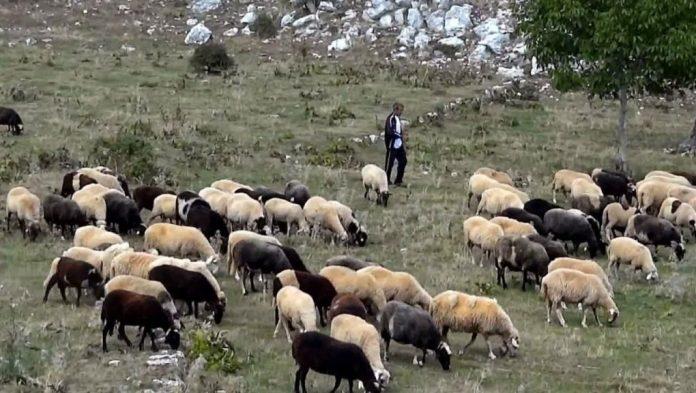 Αποζημιώσεις, ελληνοποιήσεις αμνοεριφίων, κόστος παραγωγής γάλακτος στο επίκεντρο της συνάντησης Τσιρώνη – αγροτών στη Δράμα