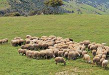Συνεδρίαση των κτηνοτρόφων της ΑΜΘ στην Ξάνθη την Τετάρτη 14/11