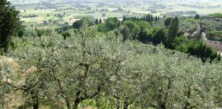 Μεσσηνία: Ενημερωτική εκδήλωση για καλλιέργεια της ελιάς