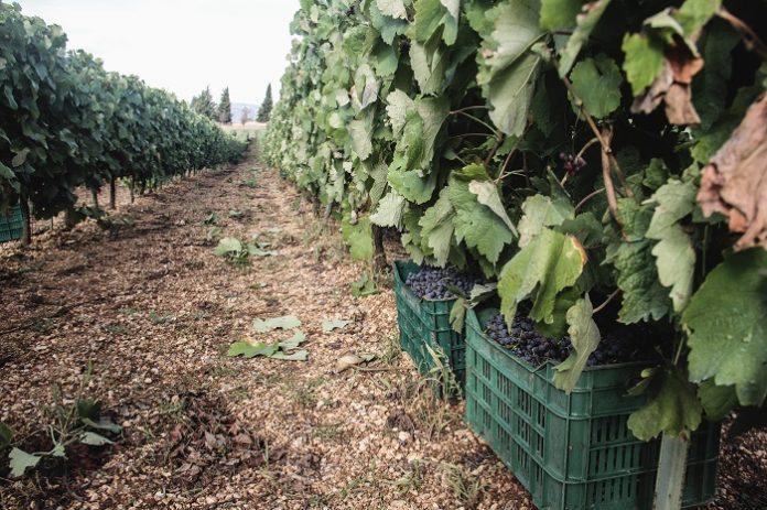 Οι πιθανές αλλαγές της ΚΑΠ για τον τομέα Οίνου σε Ευρώπη και Ελλάδα
