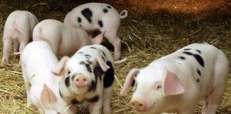 Νέος κανονισμός του USDA για την ευζωία των ζώων