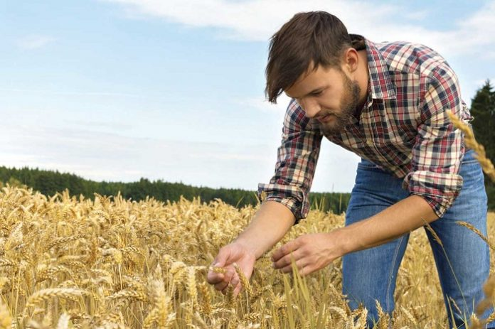 Προς ολοκλήρωση η διαδικασία πληρωμής των επιλαχόντων νέων αγροτών - Ποσό 9,4 εκατ. ευρώ για τρεις Περιφέρειες