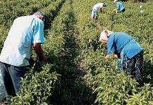 Στα 67α γενέθλια θεμελιώνουν σύνταξη πλέον οι αγρότες