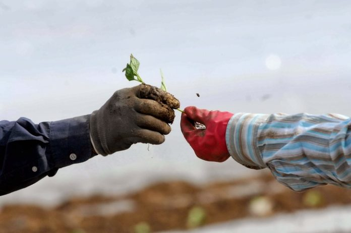 Εξετάζουν παράταση προθεσμίας για τους αγροτικός συνεταιρισμούς