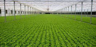 Τα πλεονεκτήματα των καλλιεργειών λαχανικών σε θερμοκήπια - διχτυοκήπια