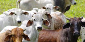 Το σκάνδαλο στη Βραζιλία ξαναμοιράζει την πίτα της παγκόσμιας αγοράς κρέατος