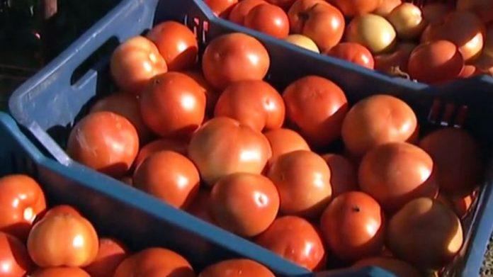Κατασχέσεις 4,6 τόνων ντομάτας με υπολείμματα φυτοφαρμάκων