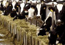 """Σλοβενία: Σε συναγερμό οι αρχές για την εισαγωγή """"ύποπτου"""" κρέατος από την Πολωνία"""