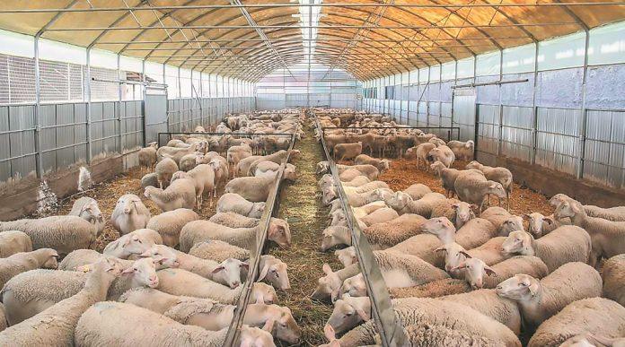 Ολοκληρώθηκε με επιτυχία η ημερίδα για την αιγοπροβατοτροφία στην Αταλάντη