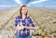 Η ζήτηση για ήπιες εκτροφές πουλερικών πιέζει τους πτηνοτρόφους