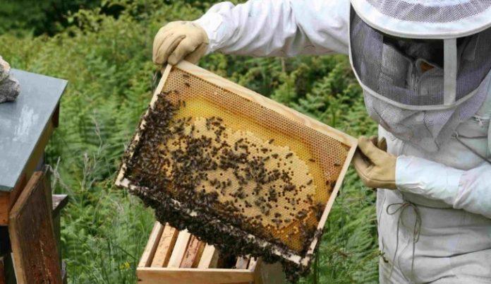 Επιστημονική Διημερίδα Μελισσοκομίας στις 5 και 6 Μαΐου στο Ρέθυμνο