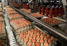 IEC Προσαρμογή στις απαιτήσεις της παγκόσμιας αγοράς