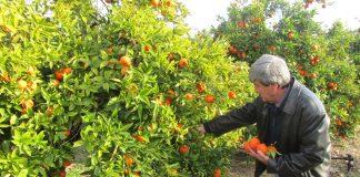 kalliergeia-portokalia-quiz-tech