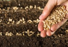 Για φύτευση και όχι εμπορία οι εισαγόμενοι σπόροι ενημερώνει ο ΚΕΠΠΥΕΛ Λάρισας