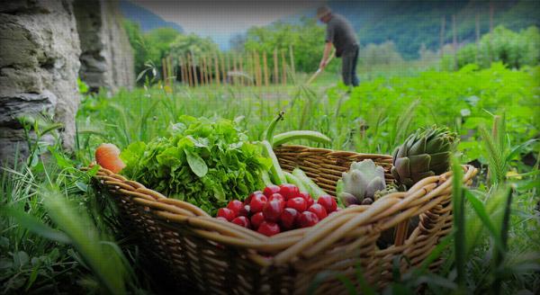Να αυξήσει τις πιστώσεις για τη βιολογική καλλιέργεια στην ΑΜΘ καλεί ο Περιφερειάρχης ΑΜΘ τον Υπουργό Αγροτικής Ανάπτυξης