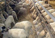 Ο ΣΕΚ στηρίζει τις κινητοποιήσεις των αγρο-κτηνοτρόφων