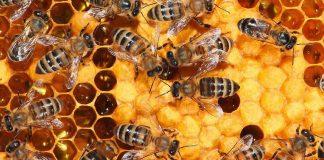 ΟΜΣΕ: Ναι στην πλήρη απαγόρευση των εντομοκτόνων που σκοτώνουν τις μέλισσες