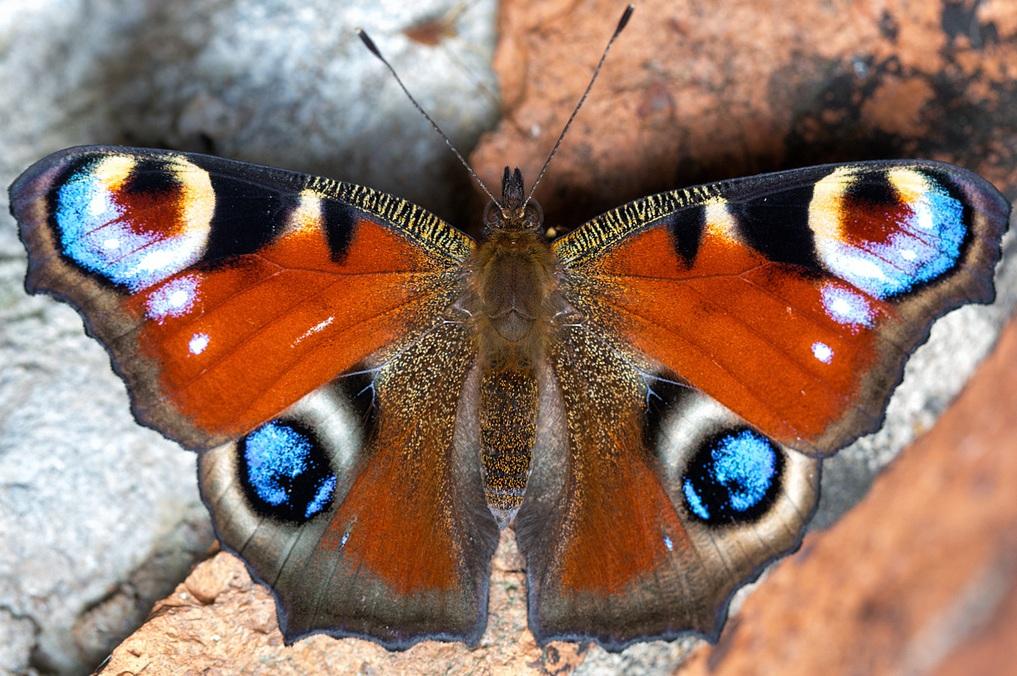 Έρχεται τον Σεπτέμβριο το 17ο Εντομολογικό Συνέδριο