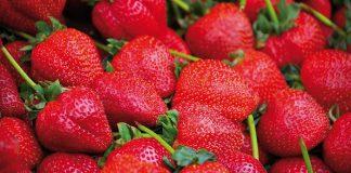 Δέσμευση 530 κιλών φράουλας χωρίς ταυτότητα στον Πειραιά