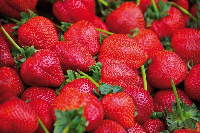 Δέσμευση 1,5 τόνου φράουλας σε επιχείρηση του Πειραιά