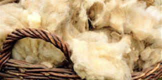 Μεγάλη γιορτή κουράς προβάτων στους Θρακομακεδόνες