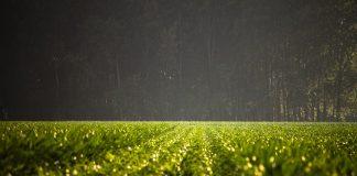 Μείωση φυτοφαρμάκων έως 42% χωρίς μείωση της παραγωγής