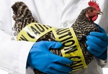 Επείγουσα ενημέρωση πτηνοτρόφων από την ΠΚΜ για τη γρίπη των πτηνών
