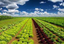 Στοχεύοντας σε ένα νέο κοινό όραμα για το μέλλον του αγροδιατροφικού τομέα στην ΕΕ