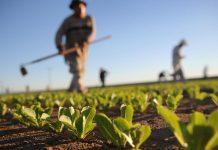 Το Ευρωπαϊκό Κοινοβούλιο προτείνει λύσεις για τη συγκέντρωση της αγροτικής γης