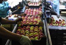 Η ασφαλής μεταποίηση φρούτων και λαχανικών στο επίκεντρο του ΕΦΕΤ που συμμετείχε στην Frescon