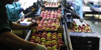 Πάνω από 145.000 κιλά τροφίμων πρόσφερε σε ευπαθείς ομάδες, μέσω του Social Plate, η ΚΑΘ