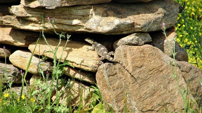 Ξερολιθιά: Η αθάνατη τέχνη της πέτρας