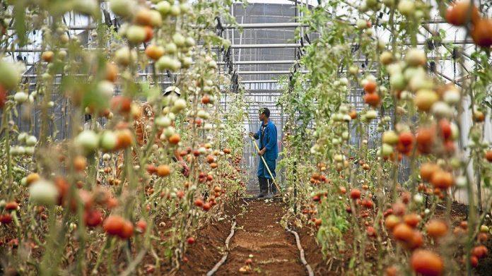 Αγροτική απασχόληση και κόστος εργασίας στην Ευρωπαϊκή Γεωργία