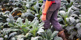 Αγροτουρισμός σε μικρές οικογενειακές μονάδες ή μικρούς συνεταιρισμούς
