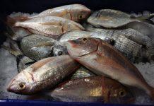 Κατάσχεση ακατάλληλων αλιευμάτων στην ιχθυόσκαλα Κερατσινίου