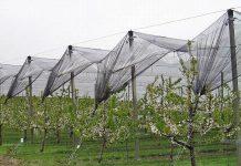 Την ένταξη νέων καλλιεργειών στο μέτρο για τα αντιχαλαζικά εξετάζει το ΥΠΑΑΤ