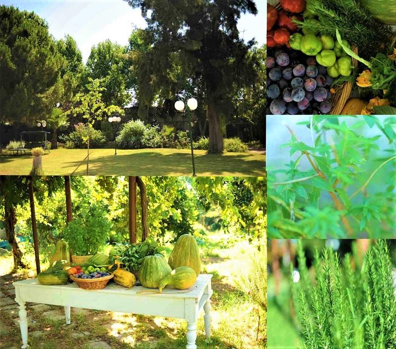 Ένα φυσικό αγρόκτημα καλλιεργεί μια ολόκληρη πόλη!