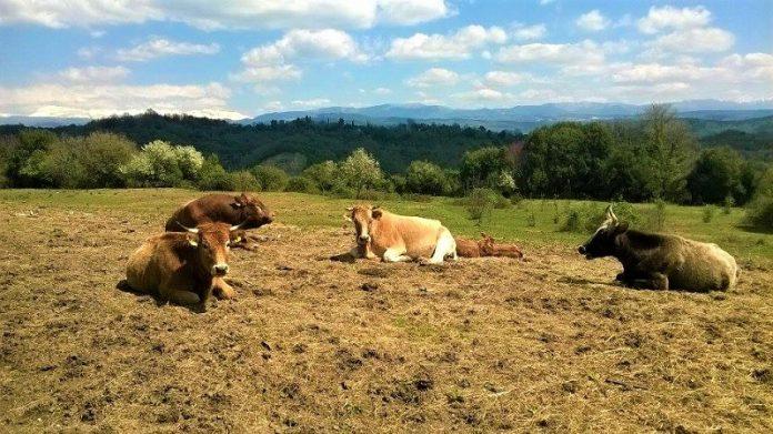 Επαναλειτουργία της σχολής Επαγγελμάτων Κρέατος στο Λασίθι, ζητά ο Β.Κεγκέρογλου