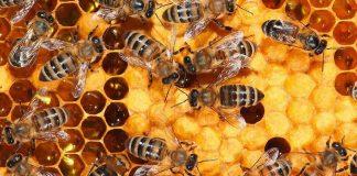 Τα αποτελέσματα έρευνας του Γεωπονικού για τα προβλήματα της μελισσοκομίας στις Κυκλάδες