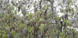 Σε απόγνωση οι δενδροκαλλιεργητές της Πέλλας – Να δοθούν άμεσα αποζημιώσεις ζητά ο Καρασμάνης