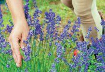 Αρωματικά και φαρμακευτικά φυτά :Voucher από το πρόγραμμα Erasmus για Νέους Επιχειρηματίες