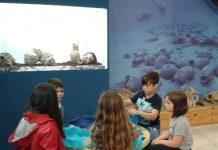 Πράσινες Πολιτιστικές Διαδρομές: Τα παιδιά διδάχτηκαν τη θάλασσα στο Αρχαιολογικό Μουσείο Κομοτηνής