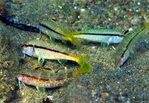 Κρήτη: Ημερίδα για το πρόβλημα των εισβολικών ειδών την Τετάρτη 20/2