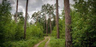 Παράτασηστην εξαγορά εκτάσεων δασικού χαρακτήρα που εκχερσώθηκαν πριν το 1975 για γεωργική εκμετάλλευση